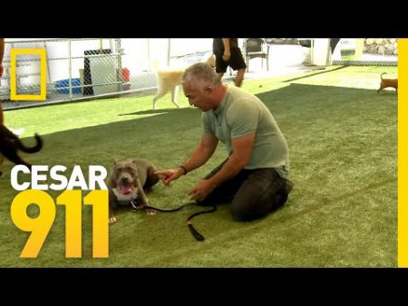 Ceaser puppy training