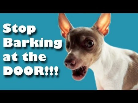 STOP BARKING – dog training playlist